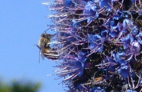 Honeybee: The buzzing; the buzzing